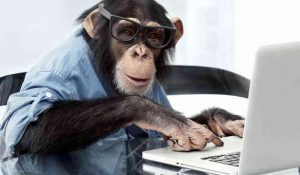 Monkey copywriter